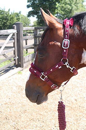 Equipride Collares de cabeza de nailon con forro de caballo con cuerda de plomo a juego Burdeos (Cob)