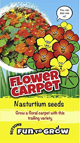 Suttons Seeds Fun to Grow - Tapis de fleurs (mélange de Nasturtium * Dayglow)