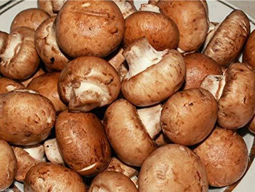 FERRY Bio-Saatgut Nicht nur Pflanzen: g Samen Spores Roy Champignon Portobello/Pilz
