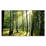 ge Bildet® hochwertiges Leinwandbild XXL Pflanzen Bilder - Wald - Natur Blumen Wald Sonnenschein grün - 165 x 100 cm mehrteilig (3 teilig) 2206 J
