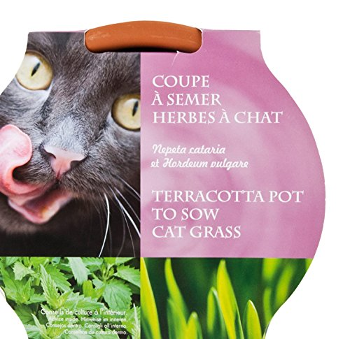 Radis et Capucine Graines d'herbe a Chat avec coupelle de Culture, Multicolore, 5x5x5 cm