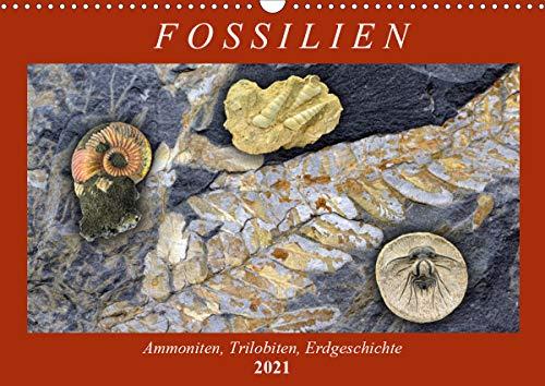 Fossilien - Ammoniten, Trilobiten, Erdgeschichte (Wandkalender 2021 DIN A3 quer)