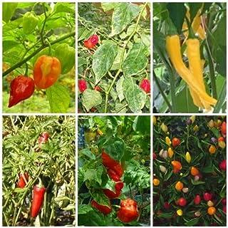 Chili Mix - 6 Arten - scharfe bis extrem scharfe Chili Sorten - je 10 Samen
