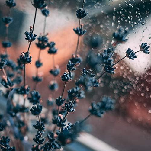 Meditation Relaxation Club, Nature Sounds, Masters of Binaurality, Rain & Rain Sounds