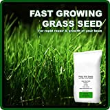 Fast Growing Rapid Lawn Recovery Grass Seed Amazing Quick Repair Pets Dogs by Pretty Wild Seeds (1kg)