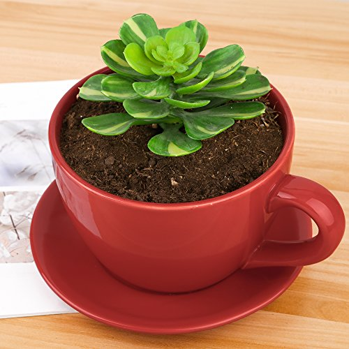 Pure.Lifestyle Porzellan Blumentopf, Kaffeetassen-förmig, Rot, Pflanzentopf, Size S