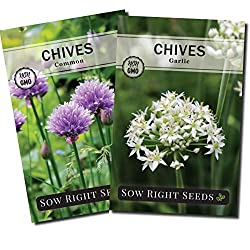Image of Chive Seeds