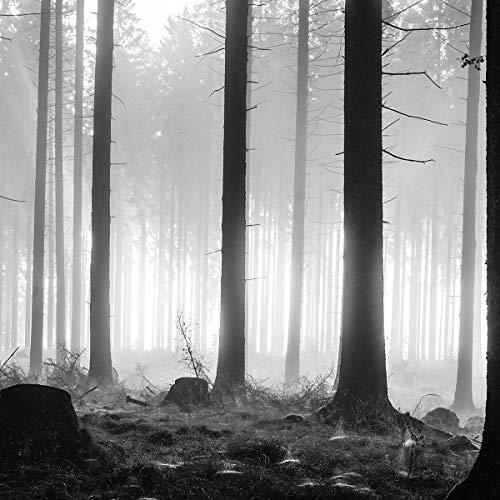 FORWALL AMF12067_Ven Papier peint photo, non tissé, décoration de mur moderne, Motif arbre de nuit, forêt, forêt dans la pénombre, nuit, avec colle pour papier peint, Non-tissé, Noir, noir et blanc, gris., V8 (368cm. x 254cm.)