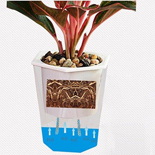 Aliciër Transparant Rhombus Zelf Watering Bloempot Mooie Plant Pot Thuis Kantoor Tuin Decoratie Festival Gift Home Decor