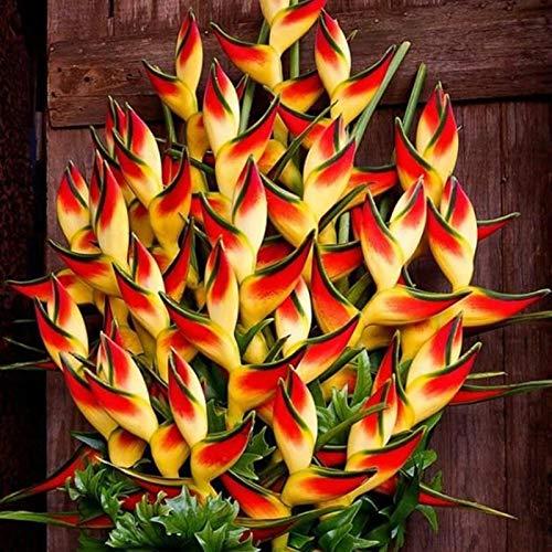 TOYHEART 50 Stück Premium Blumensamen, Heliconia Samen Nicht GVO Gute Ernte Seltene Blumensamen Heliconia Samen Natürlich Für Balkon Heliconia-Samen