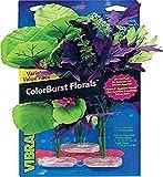 Blue Ribbon Surtido de Plantas de Acuario de racimo de Flores de Vibran-Sea Amazon