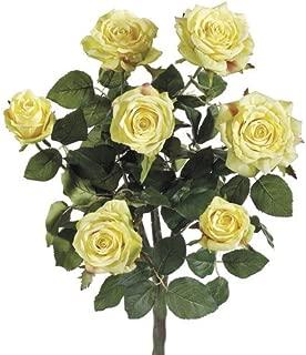 Allstate FBR054-YE 21.5 in. Yellow Confetti Rose Bush X7- Case of 6