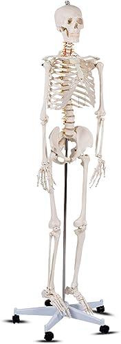 "Giantex B010L18XEW Life Size 70.8"" Human Anatomical Anatomy Skeleton Medical Model + Stand"