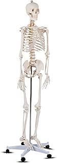 bucky skeleton