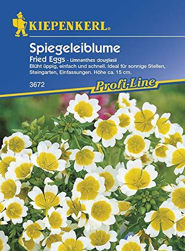 Kiepenkerl 3672 Spiegeleiblume Fried Eggs (Spiegeleiblumesamen)