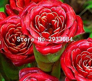 レアレッド'レッドアップランプバルブ'種子、プロフェッショナルパック、30個の種子/パック、盆栽香り