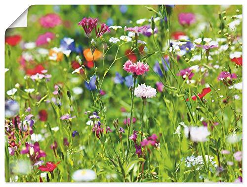 Artland Poster Kunstdruck Wandposter Bild ohne Rahmen 80x60 cm Blumen Blüten Blumenwiese Botanik Sommer Modern Kunst Q6WQ