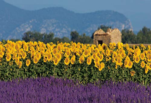 Baocicco 12x10ft Field of Sunflowers Background Spring Landscape Provence Lavender Manor Stone House Photography Background Wedding Ceremony Spring Vacation Photo Booth