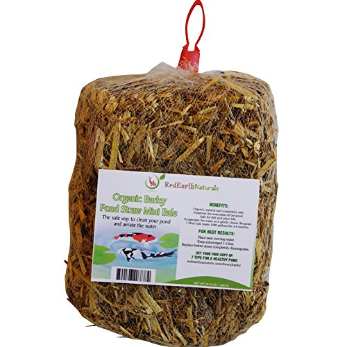 Pond Clarifier for Proud KOI Pond Owners - Premium & Organic - Barley Straw for Ponds Mini Bale - Cleans Koi Ponds & Water Gardens The Safe Natural Way
