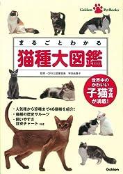 スフィンクス 子猫