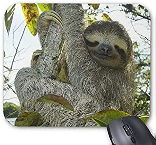 Live Life Like A Sloth Mouse Pad Rectangle Non-Slip Rubber Personalized Mousepad Gaming Mouse Pads M0991
