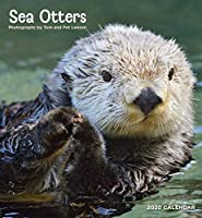 Sea Otters 2020 Calendar
