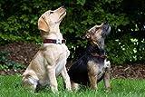 Adultos Rompecabezas Perros Sentado Terrier Animales Mascota Lindo Adorable Puzzle De Madera Clásico Decoración-500 Piezas