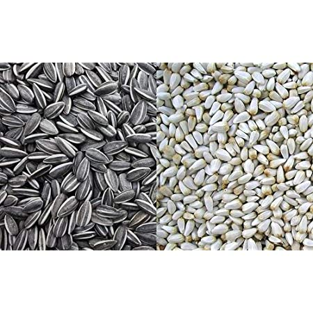 Parrots Wizard Small Sunflower and Safflower Seed Mix 900 Grams