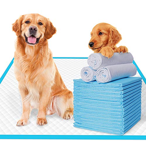 Family Dollar Dog Pad