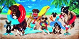 Bahia Collection by Dohler Dogs at The Beach Velour Brazilian...