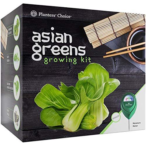 Salat/Kräuter -Anzuchtset aus Asien - Komplettset, um 4 traditionelle asiatische Salate/ Kräuter aus Saatgut anzubauen + Feuchtigkeitsmesser: Pak Choi, Japanischer Blattsenf, GAI Chow, Savoy Tatsoi