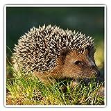 Impresionantes pegatinas cuadradas (juego de 2) 7,5 cm – Hedgehog Animal Garden Wildlife Fun Decals para portátiles, tabletas, equipaje, reserva de chatarras, neveras, regalo genial #45311