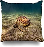 Cushion Cover Blue Beach Akumal Riviera Maya México Enero Océano Verde Coral Dive Grass Diseño Scuba Square Decoración Para El Hogar Funda De Cojín Funda De Almohada Funda De Almohada Con Cremal