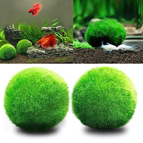 ANYIKE Aquariumdeko Mooskugel mit Garnelen, Schnecken, wartungsarm, Algenwachstum, umweltfreundlich