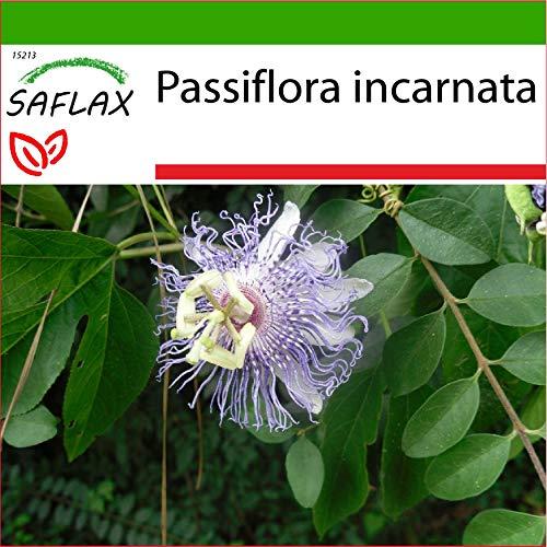 SAFLAX - Passiflore officinale - 5 graines - Avec substrat - Passiflora incarnata