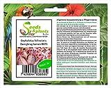 Unit 3x Cephalotus follicularis Brocca nana Sementi di piante Semi Semi da giardino Nuovi semi B874 Piante Negozio Seed Bank Pfullingen Patrik Ipsa Il tempo di germinazione per i semi nelle nostre offerte è di circa 1 a 6 settimane e con una dimensio...