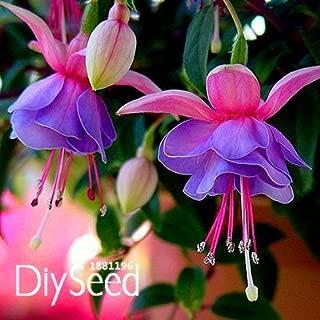 Sale!Pink Purple Bell Flowers Fuchsia Seeds Potted Flower Seeds Plants Hanging Fuchsia Flowers 50 Seed/Lot,#L16M64