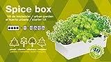 SeedBox Spice Box SBAROM - Huerto Urbano, 4 aromáticas, (albahaca, Cilantro, orégano y perejil)