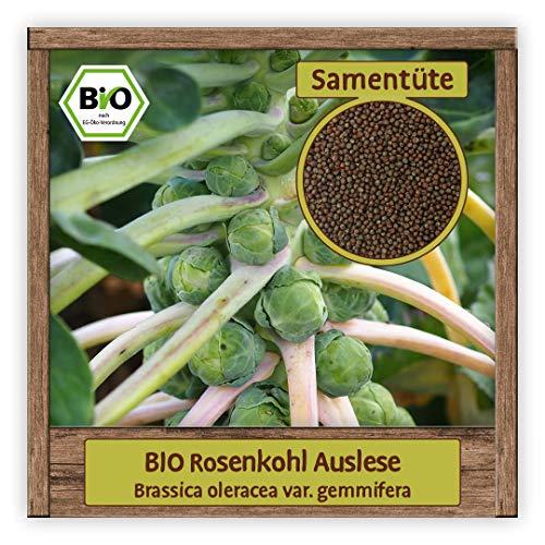 BIO Rosenkohl Samen Gemüse Saat zum Pflanzen winterhart