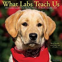 What Labs Teach Us 2021 Calendar: Life's Lessons Learned from Our Best Friends