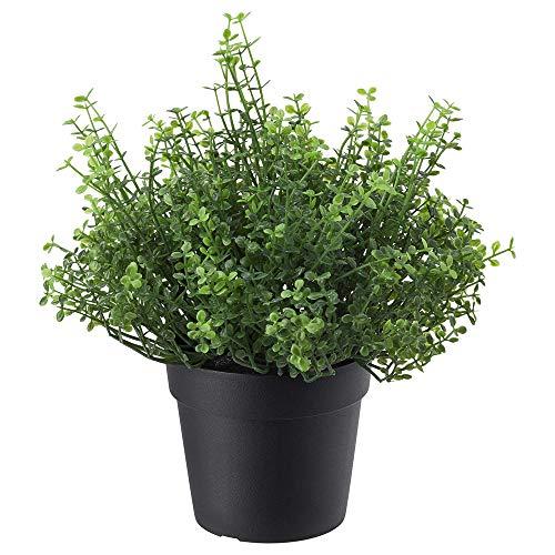FEJKA Topfpflanze, künstlich, Kräuter Rosmarin/Bubikopf/Thymian/Oregano nach Wahl (Bubikopf)
