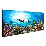 Bild Bilder auf Leinwand buntes Korallenriff mit vielen