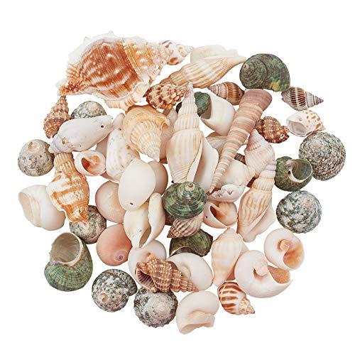 AHANDMAKER Colgantes de concha espiral natural de 300 g con cuentas para hacer joyas, hacer velas, decoración del hogar, decoración de bodas, manualidades, peceras y jarrón de relleno
