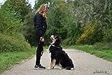 Hundeleine von Best Dog | Hundeführleine für große Hunde reflektierend mit Ruckdämpfer – Macht Gassigehen mit dem Vierbeiner-Freund zum Vergnügen, orange-schwarz, 1,50m lang - 7