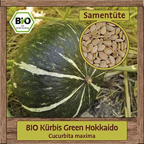 BIO Kürbis Samen Sorte Green Hokkaido (Cucurbita maxima) Gemüsesamen Kürbis Saatgut