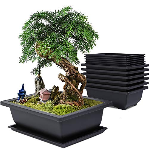 Baarrtt Bonsai Training Pots, 6 Pack 9 inches Large Planters Plastic Rectangle Bonsai Plants Flower Growing Pots with Humidity Trays