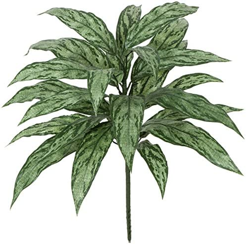 Autograph Foliages Max 48% OFF PR-556 27 Dealing full price reduction in. Bush44; Tuton Aglaonema Plastic