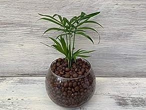 送料無料 テーブルヤシ 観葉植物 鉢植え 陶器 インテリア 北欧 ギフト お祝い おしゃれ モダンラウンドグラス