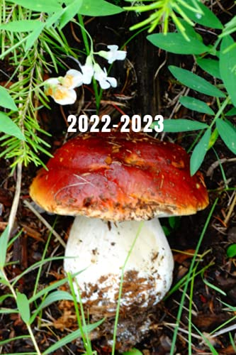 Wild Fairy Fungi Mushroom Hunter's 25 Month Weekly Planner Dated Calendar for Women & Men: 2 years plus December To-Do Lists,Tasks, Notes or ... Purse Size at-A-Glance Schedule Notebook