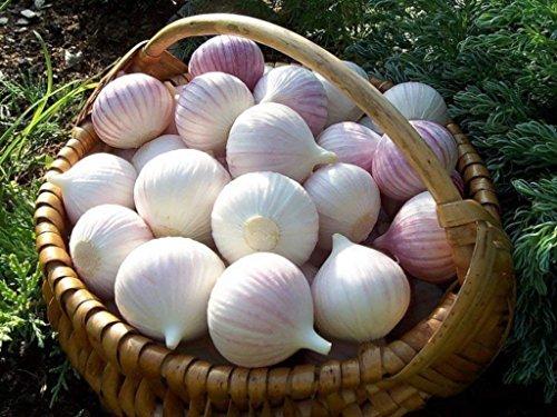9 Knoblauchknolle Riesen Allium Knoblauch Bonsai Knoblauch Chili Knoblauchpillen Haus & Garten Sementes' Frucht: 6Pcs